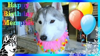 Download HAPPY BIRTHDAY MEMPHIS THE HUSKY | 4 years old Video