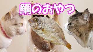 Download 猫おやつ『鯛の姿干し』にネコ吉とボス吉の反応は!?Neko Cat and Boss Cat's reaction to Cat's Snack, Dried Sea Bream. Video