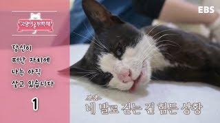 Download 고양이를 부탁해 - 당신이 떠난 자리에 나는 아직 살고 있습니다 #001 Video