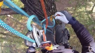 Download Remontée sur corde avec matériel d'escalade Petzl - Tree climbing with Petzl Video