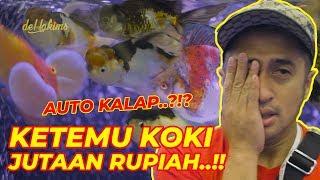 Download SATU KOKI BISA JUTAAN?? MASA BELI 1 DOANG... RARE GOLDFISH AT NUSATIC 2019 Video
