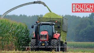 Download Mais hakselen 2016 | Claas Jaguar 900 | 3x Massey Ferguson | Nikkels | Maize harvest | Maisernte Video