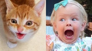 Download Proof That Cats Are Basically Toddlers Video