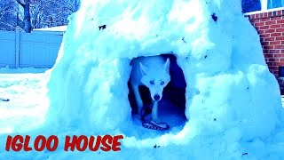 Download How to Make Igloo House Video