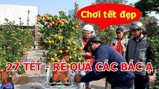 Download Đào quất ở Hà Nội rẻ như cho những ngày cận kề tết nguyên đán Video
