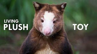 Download Tree Kangaroo: The Living Plush Toy Video