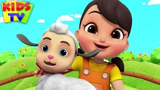 Download Mary Had A Little Lamb | Boom Buddies Children Songs & Baby Rhymes - Kids TV Video