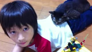 Download 息子の命を救おうとした猫 Video