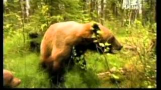 Download EPISODE 6: The End of Bear Haven? Video