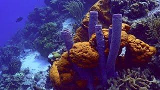 Download Bonaire scuba diving 4K sony AX100 Video