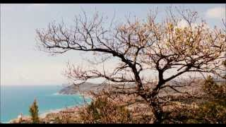 Download The Sound of Birds - 60 Mins - Natural Sounds Video
