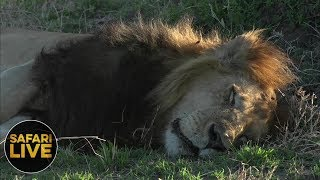 Download safariLIVE - Sunset Safari - September 15, 2018 Video