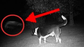 Download 5 Dogs That Saw Something Their Owners Couldn't See : ESP and the Supernatural Video