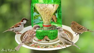 Download How To Make A Bird Feeder | DIY Homemade Plastic Bottle Bird Feeder Video