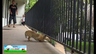 Download THIS WAS CLOSE!!! We had to back off so this dog wouldn't hurt herself badly. Video