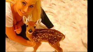 Download Dixie the Baby Deer Video