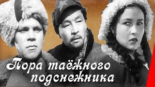 Download Пора таежного подснежника (1958) фильм Video