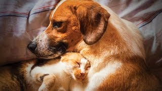 Download Cute Animals 🐶🐱 Funniest Cats And Dogs Moments (Full) [Funny Pets] Video