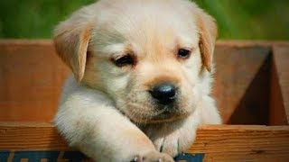 Download Funny Cute Puppies 😜🐶 Funny Dogs (Full) [Funny Pets] Video