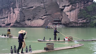 Download Fishing with Birds Cormorant Fishing Video