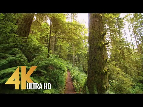 4K Relaxing Forest Walk, High Point Trail, Issaquah Area - Short Version with Music