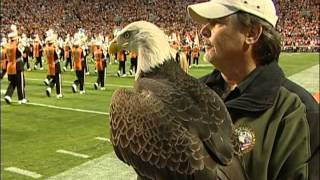 Download Bald Eagle ″Challenger″ at University of Tennessee - Oct. 23, 2010 Video