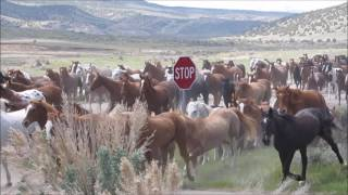 Download Great American Horse Drive 2017 Video