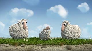 Download Lambs Video