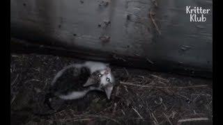 Download Cat Stuck Inside The Drain Hole | Animal in Crisis EP20 Video