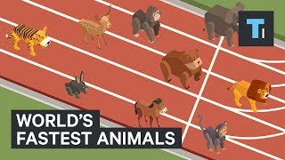 Download These are the world's fastest animals Video