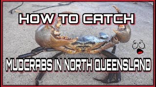 Download HOW TO CATCH AND COOK MUDCRABS. Professional Australian's Video