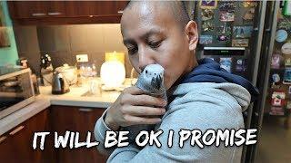 Download My Bird Is Sick - Vet results in | Vlog #285 Video