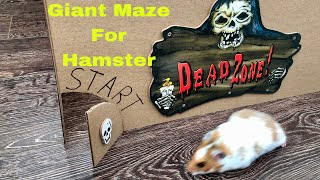 Download Halloween Giant Maze Labyrinth for Hamster - Halloween Hamster Obstacle Course Video