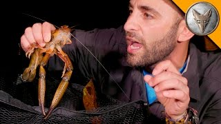 Download MONSTER River Shrimp! Video