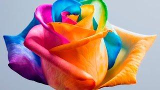 Download ТОП 10 Самые ДОРОГИЕ и РЕДКИЕ цветы в мире/ЛЮБОПЫТНЫЕ ФАКТЫ Video
