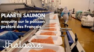Download Planète saumon, enquête sur le poisson préféré des Français Video