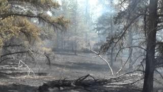 Download Massive wildfire Duck Lake Fire in Luce County, Michigan 2012 Video