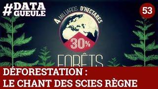 Download Déforestation : le chant des scies règne - #DATAGUEULE 53 Video