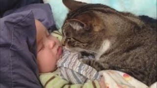 Download ″Cats Love Babies Compilation″ || CFS Video