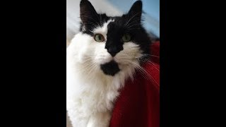 Download How-to give fluids to your cat - no stress tutorial Video
