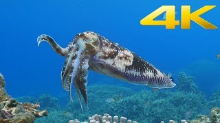 Download Sony 4K Demo: Beautiful Sea in Okinawa Video