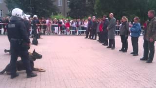 Download Polizei Hundestaffel Schutzhund Demonstration- police dog unit guard demonstration Video