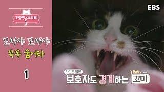 Download 고양이를 부탁해 - 꼬마야 꼬마야 꼭꼭 숨어라 #001 Video