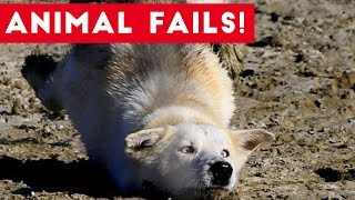 Download Funniest Animal Fails August 2017 Compilation | Funny Pet Videos Video