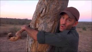 Download Safari Live : James hugging a tree ( Funny ) Aug 10, 2016 Video