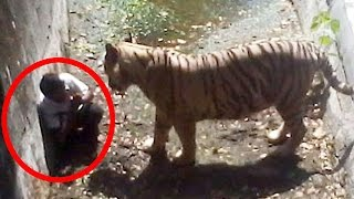 Download 5 Most Shocking Animal Attacks Caught on Tape Video