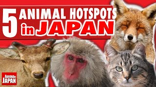 Download 5 Must See Japanese Animal Hotspots Video