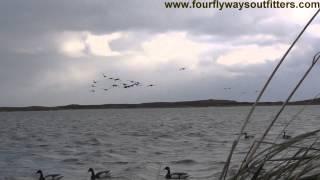 Download Sea Duck, Brant and Ptarmigan Hunting in Alaska Video
