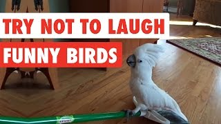 Download Try Not To Laugh | Funny Birds Video Compilation 2017 Video