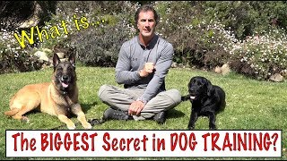 Download The Biggest Secret in Dog Training - What the Best Dog Trainers Know - Understand Your Dog Video